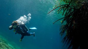 Dive in Casa Cenote