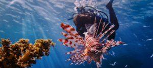 Hunt for LionFish