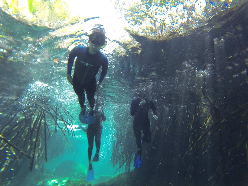 Snorkel tour in Casa Cenote