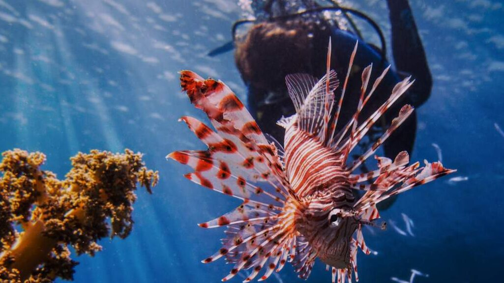 lion fish harpoon hunt