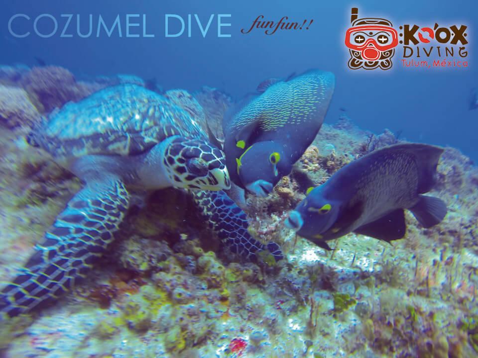 cozumel reef sea turtles
