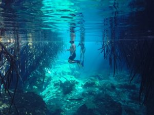 Cenote snorkel