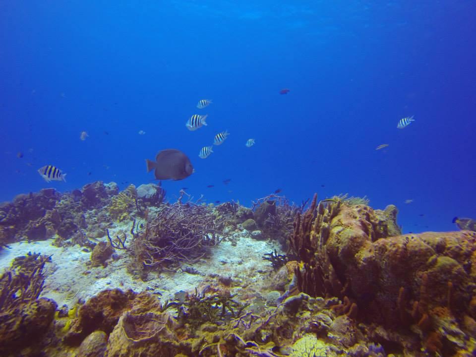 Cozumel Reef Snorkelling