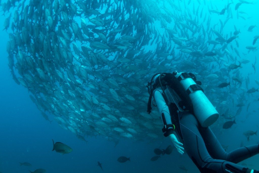 Scuba Diver surrounded by marine life