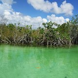 Floating in the Mayan Mangrove Canal