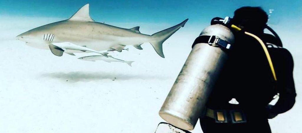 Bull shark playa del carmen diver