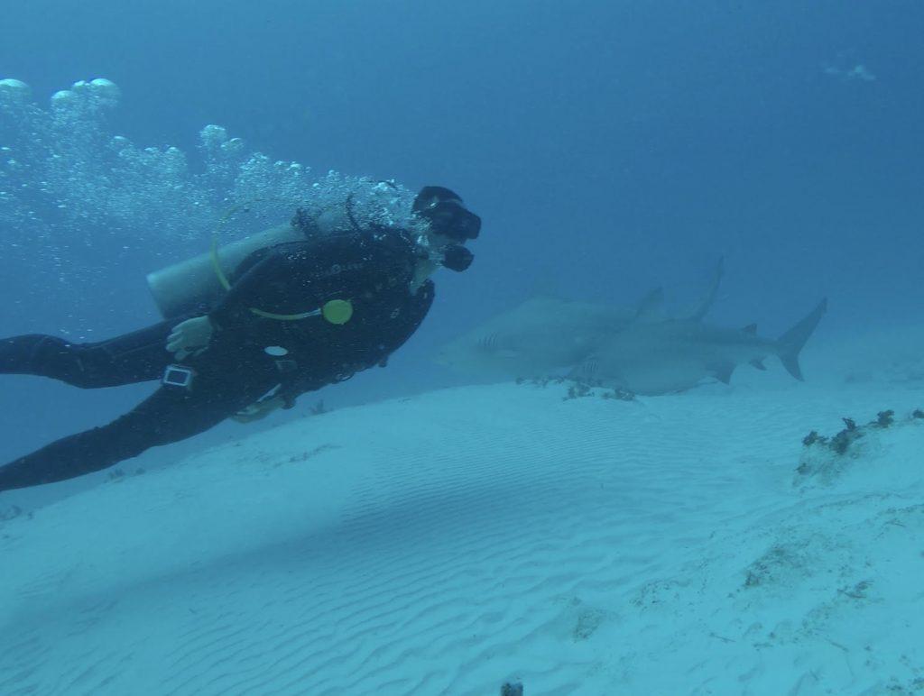 bull shark diving photo