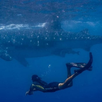 Whale Shark DIving