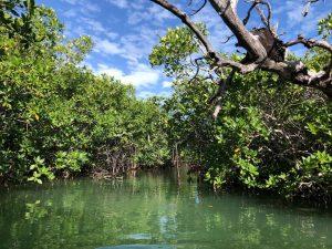 kayaking nichupte lagoon
