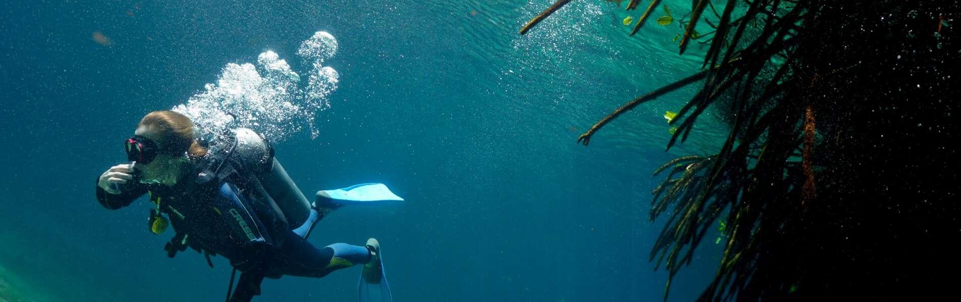 Casa Cenote Diving