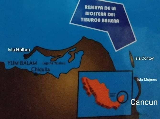 Whale shark map