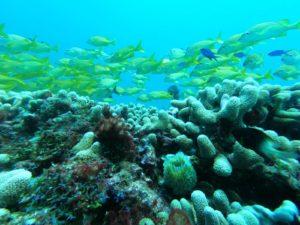 Puerto Morelos Coral Reef