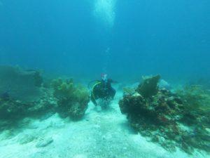 puerto morelos coral reef diver