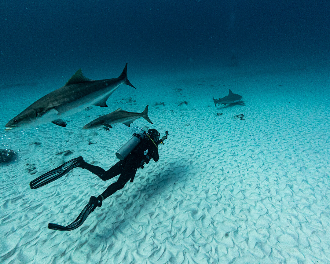 Advanced open water adventure dive - bull sharks